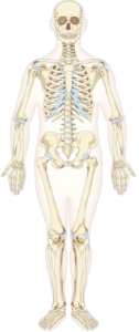 Ostéopathie et douleur lombaire